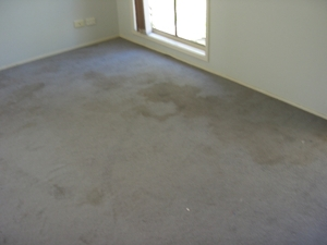Stained carpet (before cleaning)